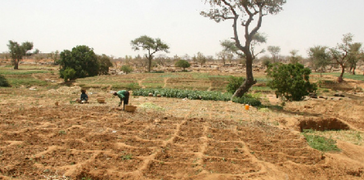 Agrobusiness : Champions africains vs multinationales