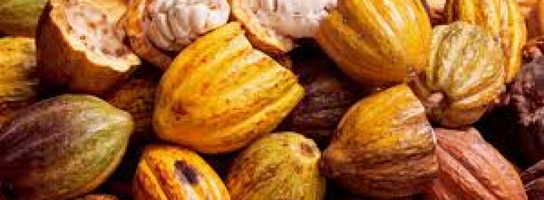 Ivory Coast:  Increase in cocoa production by 28%