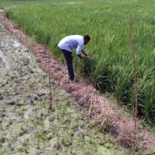 Ghana: South Korea offers 9 million US $  to develop rice farming